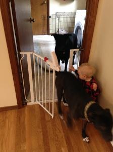 Doggie jailbreak.