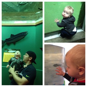 A day at the aquarium.